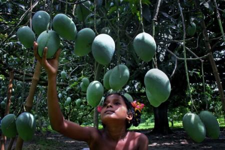 Mango Garden Girl
