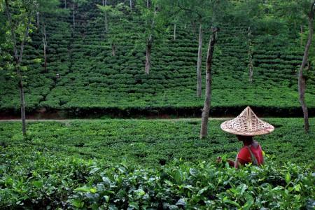 People in Tea state