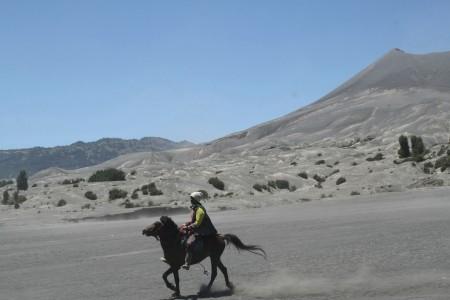 Bromo's Equestrian