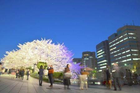 Salary man enjoying sakura at night