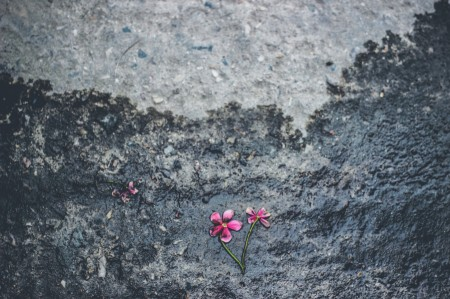 fate of flower