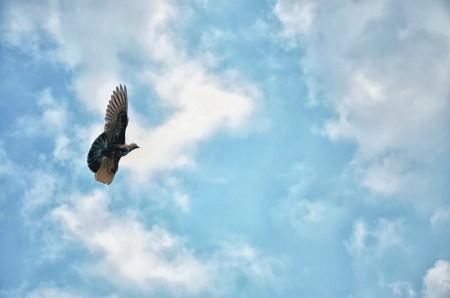Terbanglah