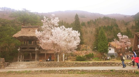 Wonderful Shirakawa-go