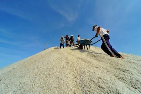 Thu hoạch muối