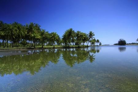 The temptation of coconut tree