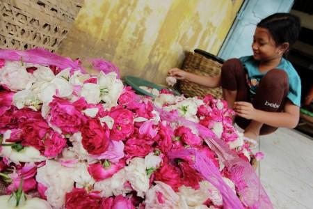 Memilih Bunga Mawar