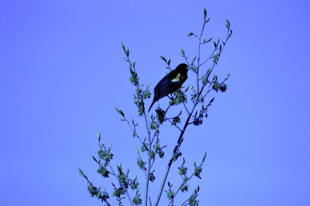 Bird in the branch
