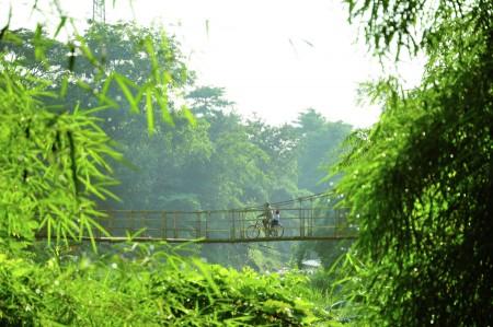 pursue a suspension bridge