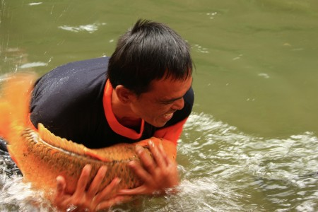 Menangkap Ikan Mas