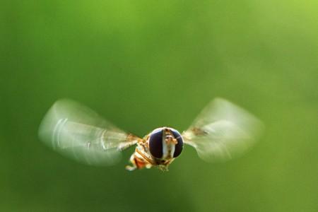 HONEY BEE FLIGHT