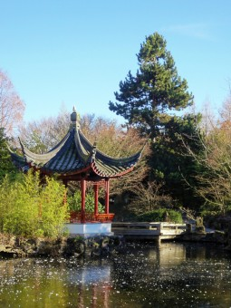 Relaxing chinese garden