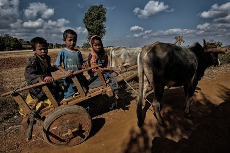 Child who ride cows vehicle