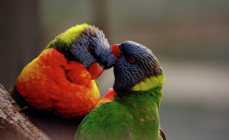 A bird's love