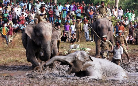Injure wide Elephant struggling for  life over 288 hrs.