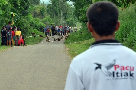 Duck Flying Race ( Pacu Itiak)