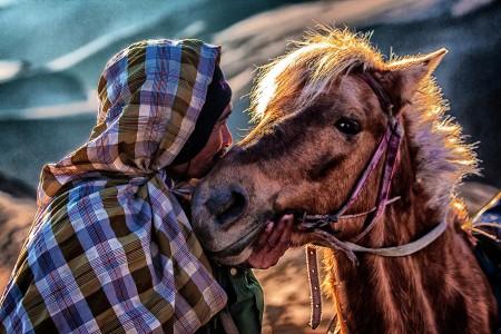 kuda kesayanganku