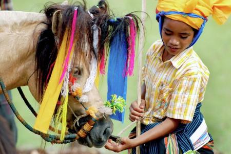 Horse of Pasola