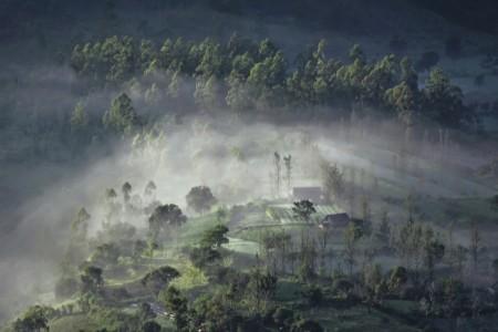 Kabut Kintamani