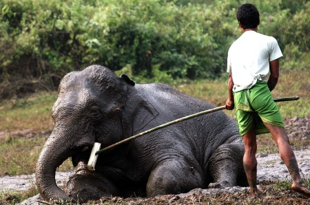 Villager trying to give food for Injure wild Elephant