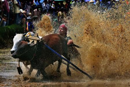 bull's race