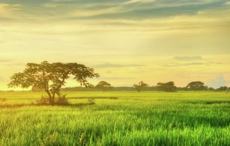 Sein Pan Tree