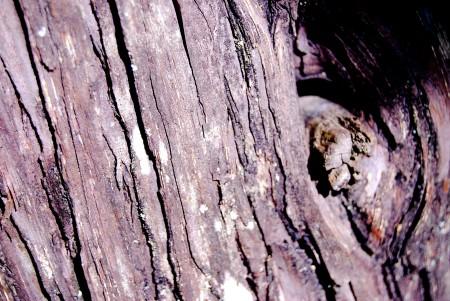 """""""Goresan Indah Kulit Pinus"""""""