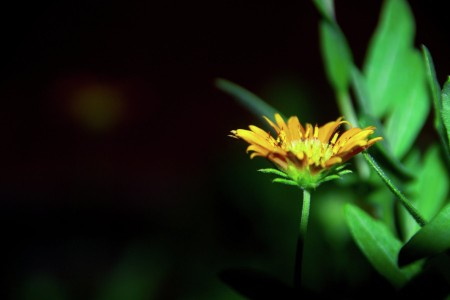 Beauty of Yellow in Dark